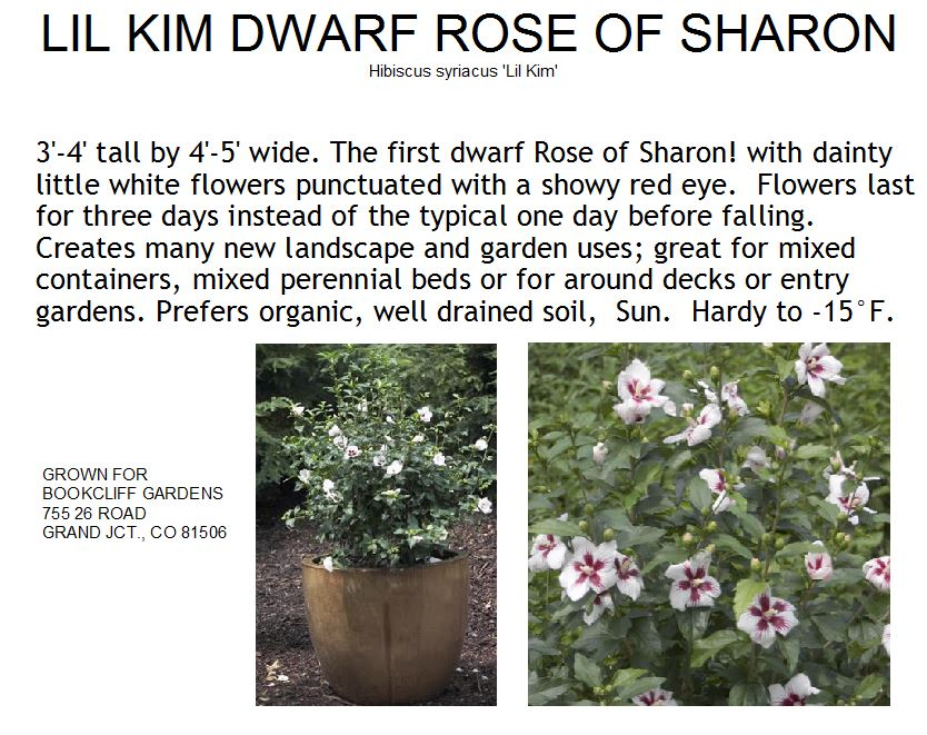 Rose Of Sharon Lil Kim